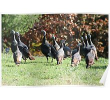 TURKEYS IN THE YARD Poster
