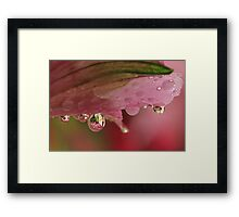Clearly Pink Framed Print