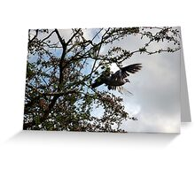 Wood Pigeon in Flight Greeting Card