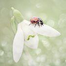 The first ladybug by EbyArts