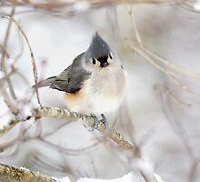 Titmouse bird snowy branch winter iPhone case by RobTravis