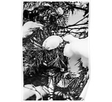 Black and White Snowy Limbs Poster
