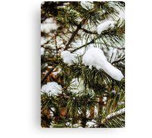 Snowy Limbs Canvas Print