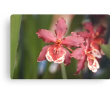 Orchid Beauty Canvas Print