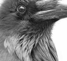 Nevermore - Raven Sticker
