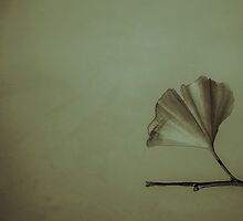Ginkgo Leaf by Carrie Cole