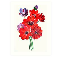A Posy Of Wild Red And Lilac Anemone Coronaria Art Print