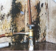 plumbing pipe leaks Westpalmbeach by addieturner62