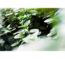 Tranquil Afternoon Photographic Print