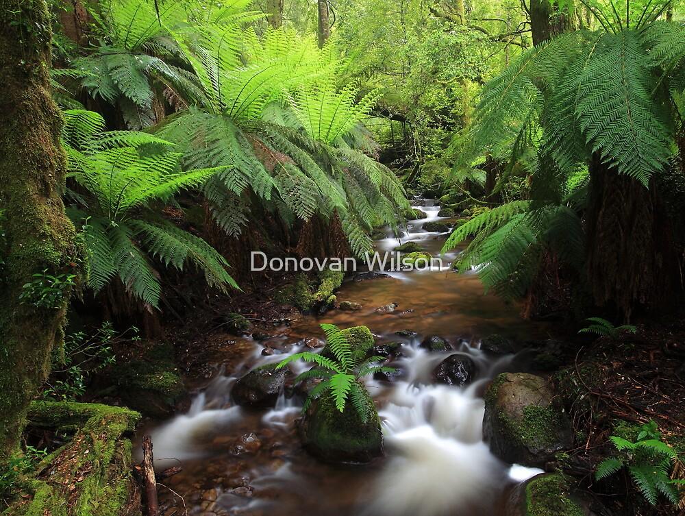 The Green dream  by Donovan Wilson