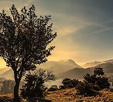 Stunted Tree - Cumbrian Fells by David Lewins