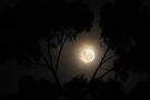 Waning Moon on the rise by Duncan Waldron