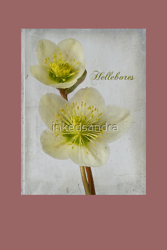 Hellebores by inkedsandra