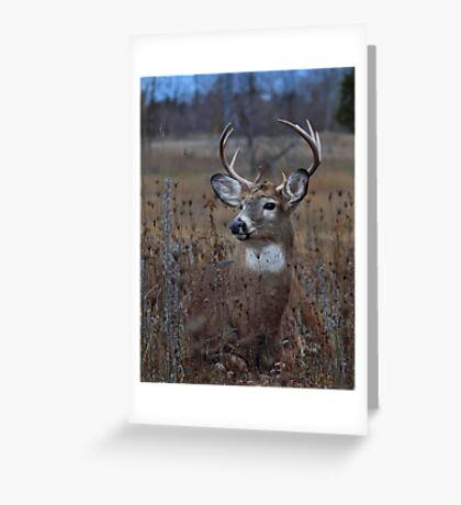 Splendor in the Grass - White-tailed Deer Greeting Card