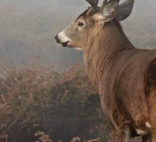 Big Buck - White-tailed Deer Sticker