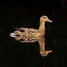 Summer Duck by photosan