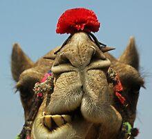 Kiss Me You Camel! by Ren Provo