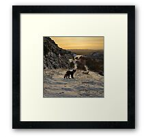 The pine marten's path Framed Print