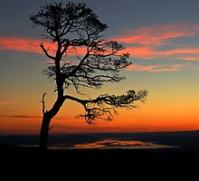 Sunrise silhouette by Macrae images
