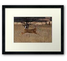 Grass Hopper - White-tailed Deer Framed Print
