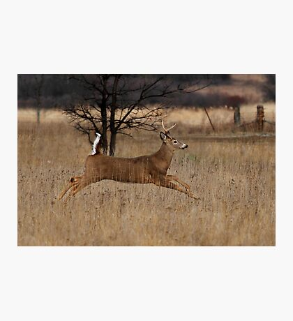 Grass Hopper - White-tailed Deer Photographic Print