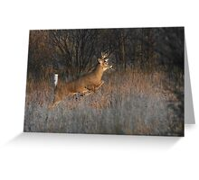 Buck on the Run - White-tailed Deer Greeting Card