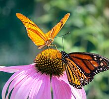 *Nature's Most Beautiful Winged Insects - Butterflies* by Robert Kelch, M.D.