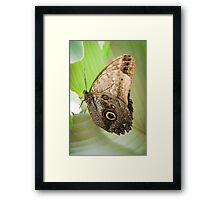 Great Owl Butterfly Framed Print