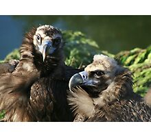 Black Headed Vulture Photographic Print