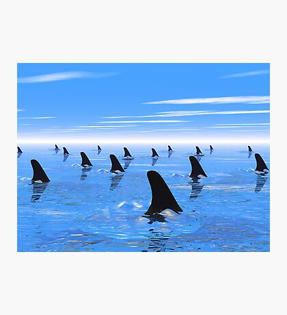 Swimming with sharks Photographic Print