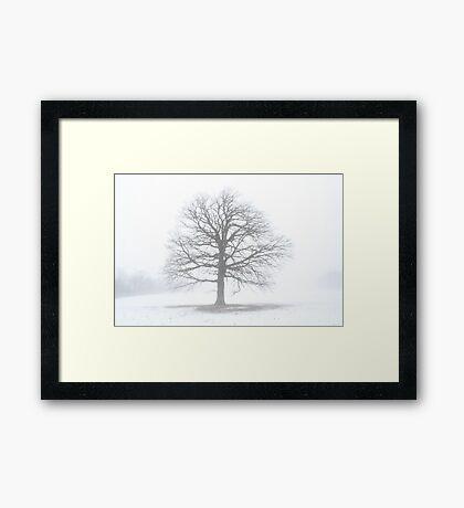 Oak Tree Shine Framed Print