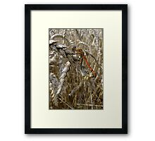 Couple of Dragons Framed Print