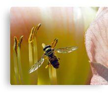 Hoverfly inside Daylily Canvas Print