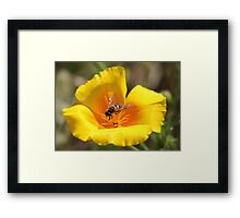 Insect on Flower Framed Print