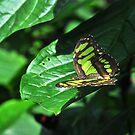 Pretty in Green by gharris