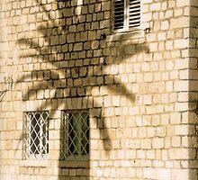 A Palm's Shadow - Trogir, Croatia by Tricia Mitchell