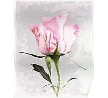 Singel rose Poster