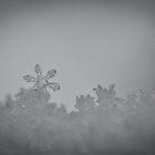 Snowflake by DMontalbano