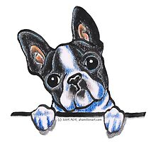 Curious Boston Terrier by offleashart