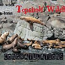 Topshelf Wildlife banner entry by Nancy Richard