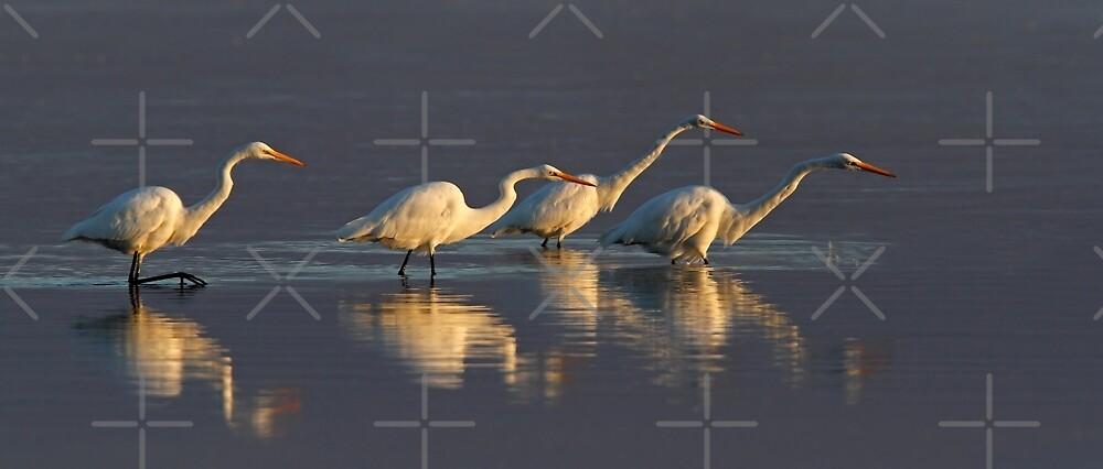 Fishing - Great Egrets by Jim Cumming