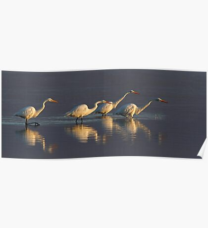 Fishing - Great Egrets Poster