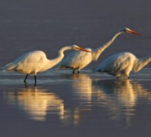 Fishing - Great Egrets Sticker