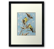 Goldfinch On Seed Pod Framed Print