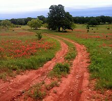 Country Road by Wulfhere