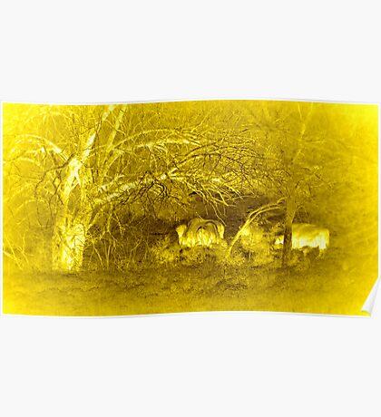 Buffalo Landscape Poster