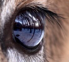 Now thats an eyefull! - White-tailed Deer Sticker