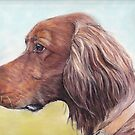 Irish Setter Profile by Charlotte Yealey