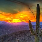 Desert Sunset by Ray Chiarello
