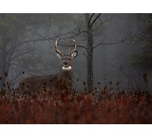 Big Buck - White-tailed Deer Photographic Print